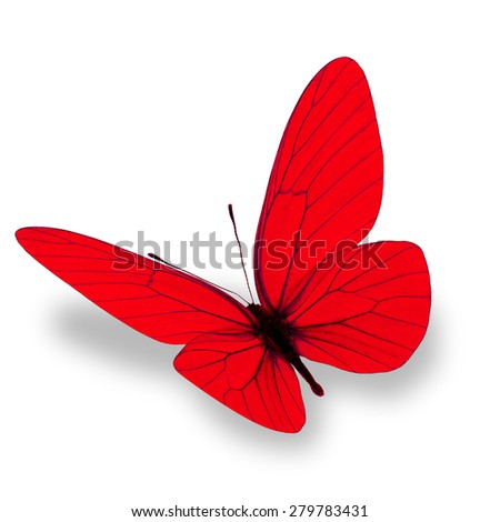 red butterfly isolated on white background - stock photo