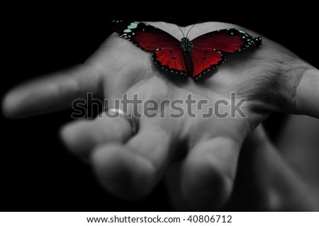 red butterfly on human's hand - stock photo