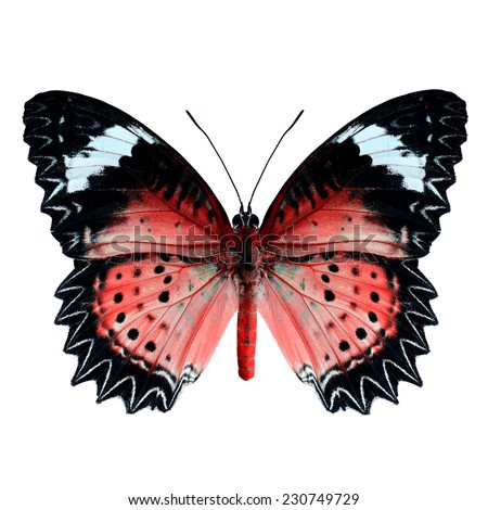 Red butterfly upper wing profile isolated on white background. - stock photo