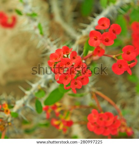 Red cactus flowers - stock photo