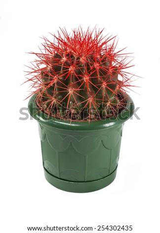 red cactus in a pot isolated on white background - stock photo