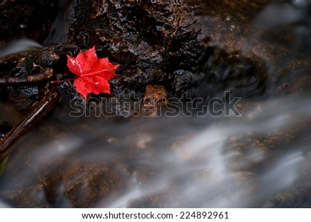 Red Canadian maple leaf with waterfall - stock photo