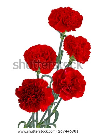 Red carnation flower bouquet isolated on white background - stock photo