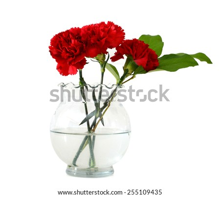 red carnation flowers in vase on white background  - stock photo