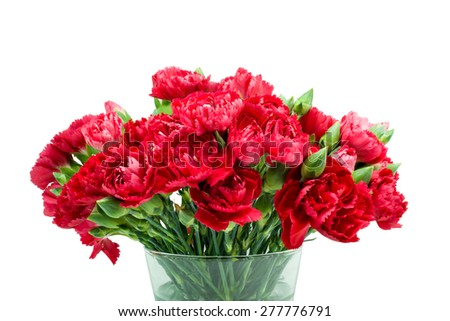 Red carnation in glass vase isolated on white background - stock photo