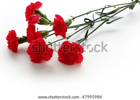 Red carnations - stock photo