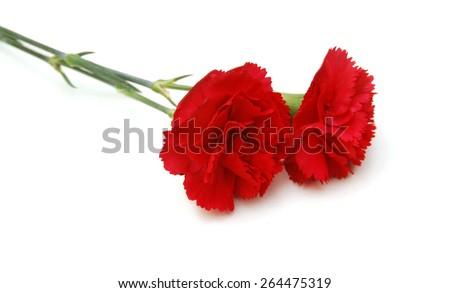 red carnations flower on white background - stock photo