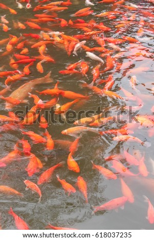 Pond stock images royalty free images vectors for Red koi carp