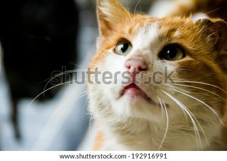 red cat - stock photo