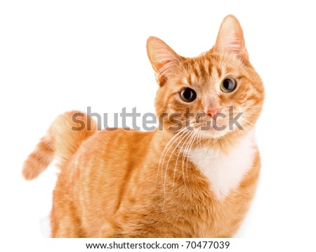 Red cat - stock photo