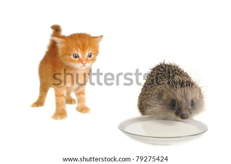 Red cat and hedgehog isolated on a white background - stock photo
