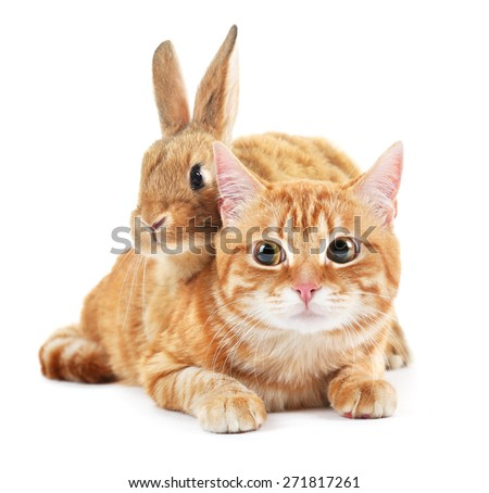 Red cat and rabbit isolated on white - stock photo