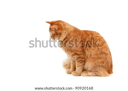 red cat attention isolated on white background - stock photo
