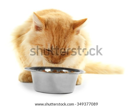 Red cat eating isolated on white background - stock photo
