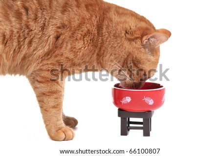Red Cat eating its tasty lunch standing isolated on white background - stock photo