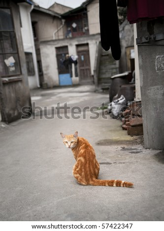 Red cat in a Chinese street - stock photo
