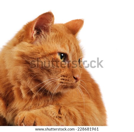 Red Cat in front of a camera looking aside - stock photo