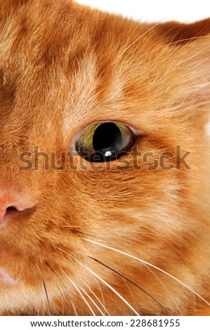 Red Cat in front of a camera looking forward to us in closeup - stock photo