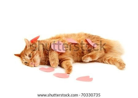 red cat in heart valentines feels tired of declaration of love isolated on white background - stock photo