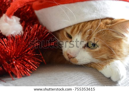 red cat in red hat christmas