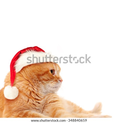 Red Cat in Santa Hat on White Background. Christmas Concept