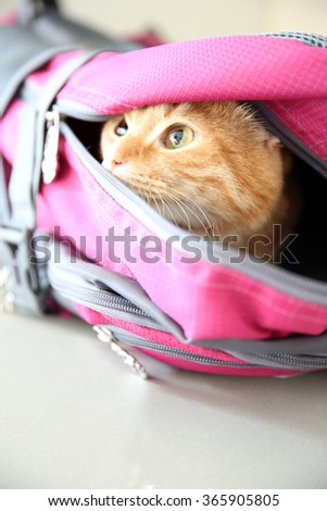 Red cat in sport bag, close up - stock photo