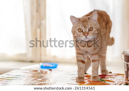red cat is looking right - stock photo