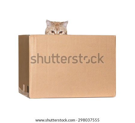 red cat isolated in a box - stock photo