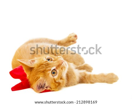 red cat lies on the floor with ribbon isolated on white background