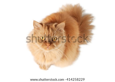 Red cat looking up from below - stock photo