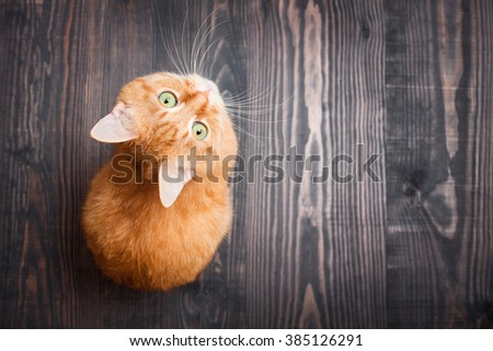 Red cat looking up sitting on the wooden background - stock photo
