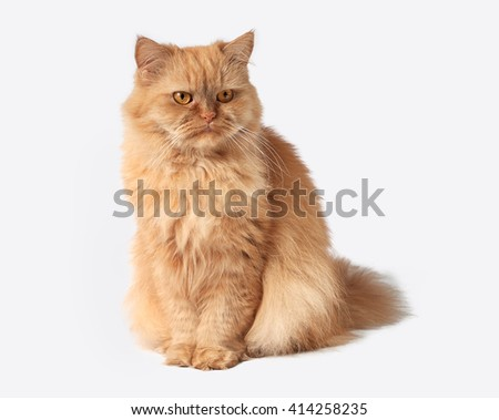 Red cat looks aside 2 - stock photo