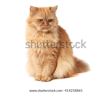 Red cat looks down - stock photo