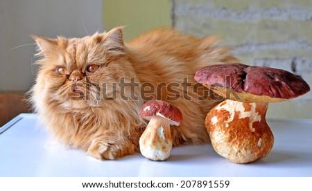 Red cat lying beside mushrooms - stock photo