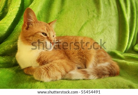 red cat lying on green coverlet