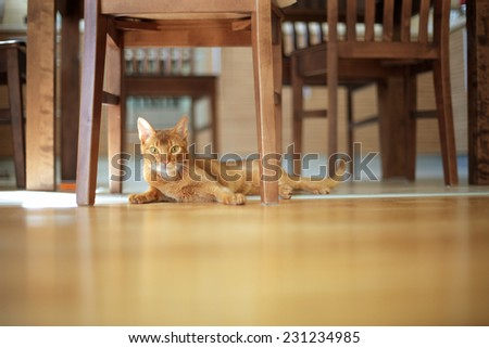 Red cat lying on the floor head elevated - stock photo