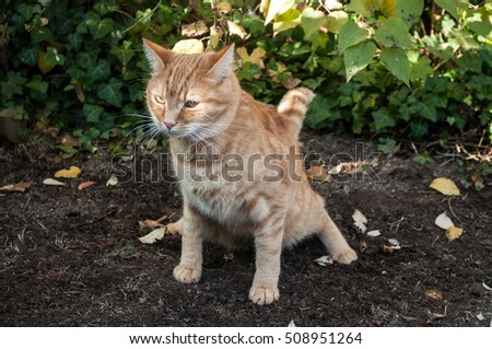 Red cat making poo garden soil stock photo edit now 508951264 shutterstock for How to keep cats from pooping in garden