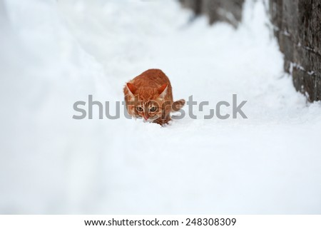 Red cat near fence on white snow background