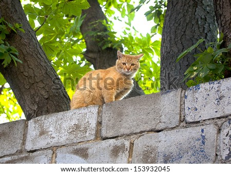 red cat on a brick fence - stock photo
