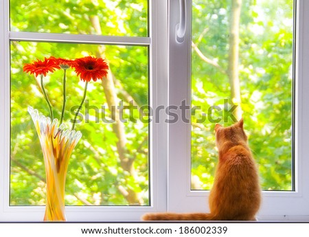 red cat on the window - stock photo