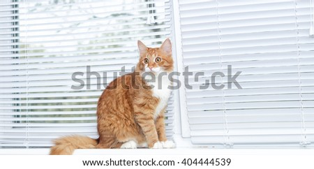 red cat on window