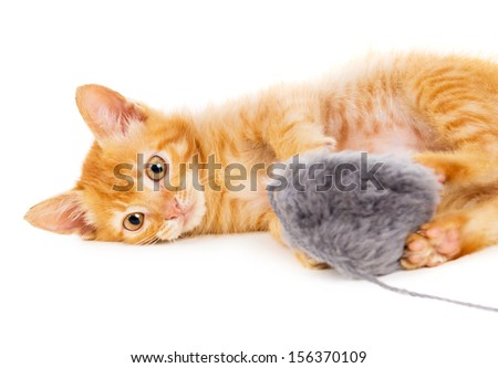 red cat plays with a toy isolated on white background