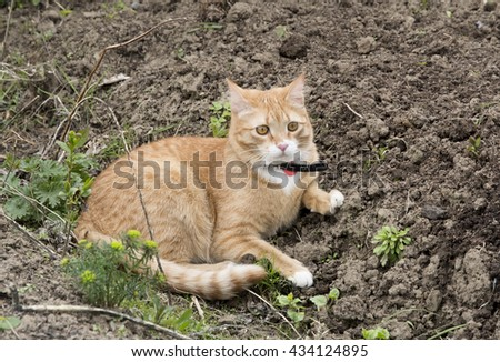 Red cat resting in a garden