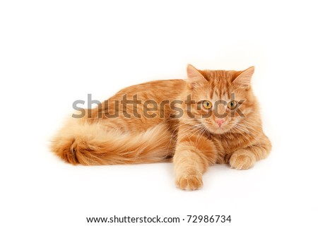 red cat resting isolated on white background - stock photo