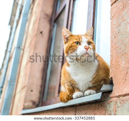 Red cat seating on a windowsill
