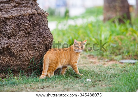 Red cat sitting in grass under a palm tree. - stock photo