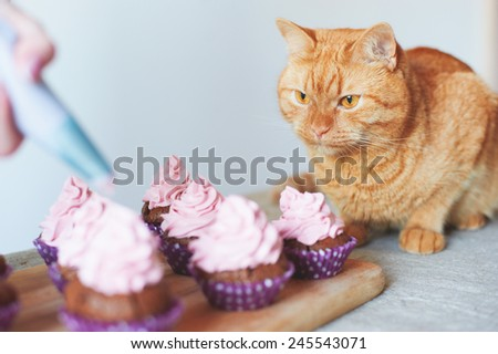 red cat sitting near cupcakes on the table