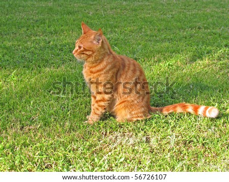Red cat sitting on green grass - stock photo