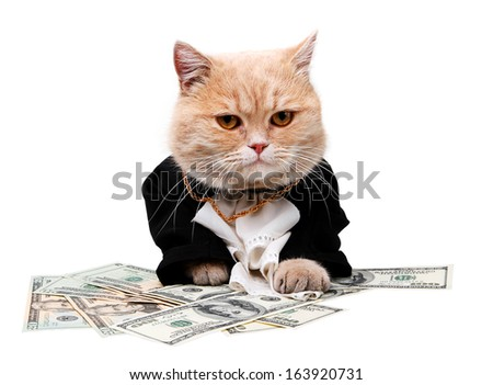 Red cat sitting on the dollar on the white background - stock photo