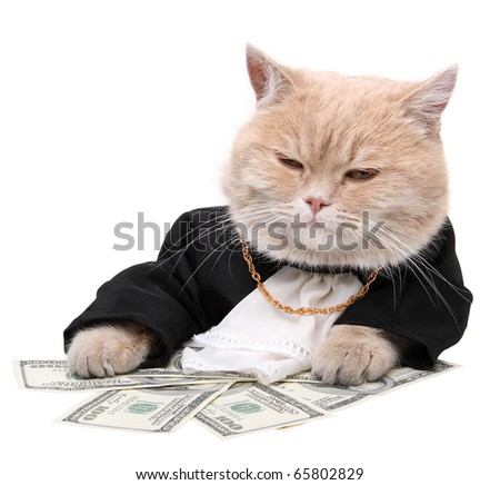 Red cat sitting on the dollar on the white background, Christmas, New Year - stock photo